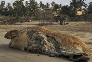 whale-beach-mumbai